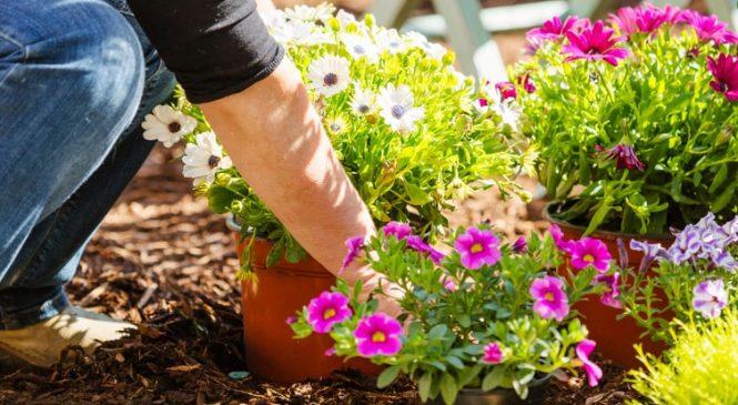 Преимущества комплексного ухода за садом